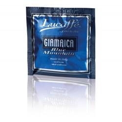 Pack 12 monodosis ESSE JAMAICA Lucaffe
